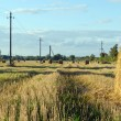 Straw bales field electric wire poles autumn sky - Stock Photo