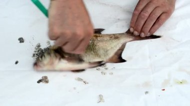 Fisherman hand with knife clean bream fish scale — Stock Video