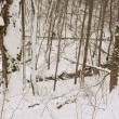 Panorama small creek brook winter forest tree snow — Stock Video