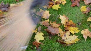 Closeup colorful autumn maple tree rake wooden raker — Stock Video