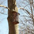 Tree bark made nesting boxes hung on a tree branch in park — Stock Video