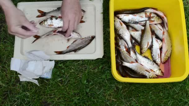 Hombre manos roach crudo atrapado fresco sal pescado — Vídeo de stock