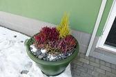 Plastic pot decorative heather stones office door — Stock Photo
