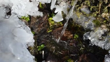 Clear water flow ice — Stock Video