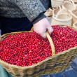 Hand farmer wick basket mossberry market ecologic — Stock Photo