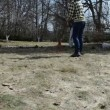Gardener woman rake leaves dry grass and cat walk in spring — Видео