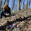 Stock Video: Girl squat in forest reaps violet in early morning