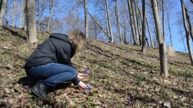 Girl in the forest reaps first spring flowers — Stock Video