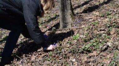 Blonde girl in the woods picks violet — Stock Video