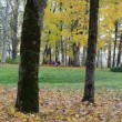 Stockvideo: People relax autumn park