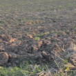 Agricultural plowed field — Stock Video