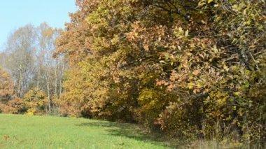 Herbst farbe blatt wiese — Stockvideo