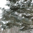 Bird house fir tree snow — Stock Video