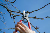 Woman hand trim tree twig clipper spring garden — Foto de Stock