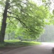 Dense fog park tree car — Stock Video