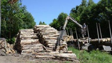 Man load log transport — Stock Video