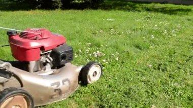 Leg cut grass — Stock Video