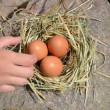 Stock Video: Hand gather egg nest