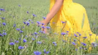 Hand touch cornflower — Stock Video