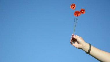 Hand poppy blue sky — Stock Video