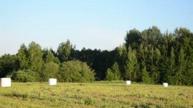Animal fodder bales — Stock Video