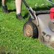 Meadow grass cut — Stock Video