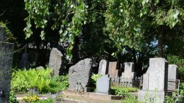 Tombstone tree graveyard — Stock Video