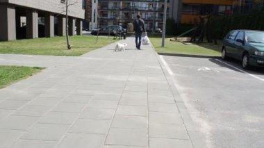 Man leash dog — Stock Video