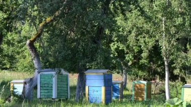 Bee hives fruit trees — Stock Video