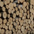 Firewood wood logs fuel — Stock Video