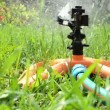 Sprinkler watering lawn — Stock Video #36019157