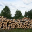 Wood fuel logs stack — Stock Video #36205067