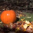 Pumpkin leaf garden tree — Stock Video