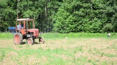 Tractor sow field bird — Stock Video