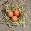 Hand gather egg nest — Stok Video #36841509