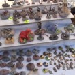 Stock Video: People buy animal figure
