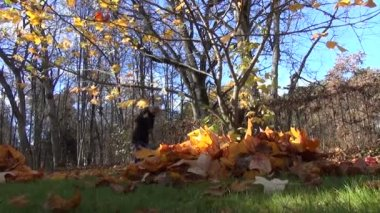 Leaves pile female worker — Wideo stockowe
