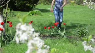 Woman tulip flower garden — Stock Video