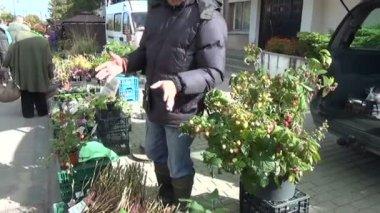 Seller seedling market — Stock Video