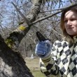 Gardener woman cut twig — Stock Video