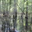 Stock Video: Water flood forest