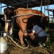 Stock Video: Woman milking machine cow