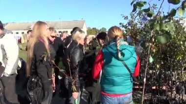 Vendor market apple tree — Stock video