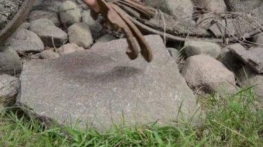 Рука лошади обуви камень — Стоковое видео