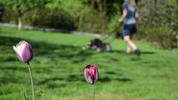 Jardín de flores mujer trabajo — Vídeo de stock