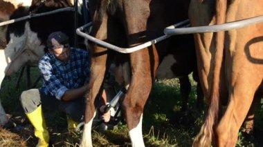 Portable milking gear — Stock Video