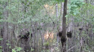 Flooded trees sun reflect — Video Stock