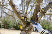 Hand hold saw at the thick branches of dry tree  — Стоковое фото