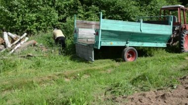 Forest trailer log branch — Stock Video