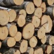 Stock Video: Truncated tree log close
